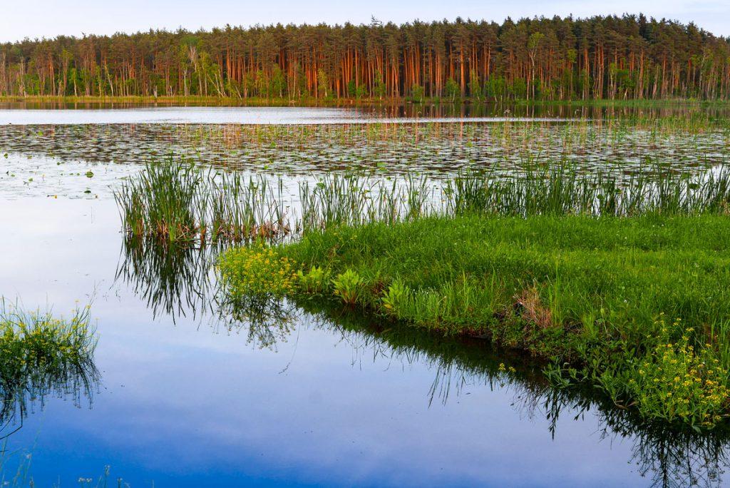 Jezioro-Perespa,-Sobiborski-PArk-Krajobrazowy---fot